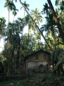 Typical village houses dot roads in the Konkan