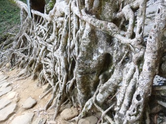 Mangled roots hold this beautiful structure together