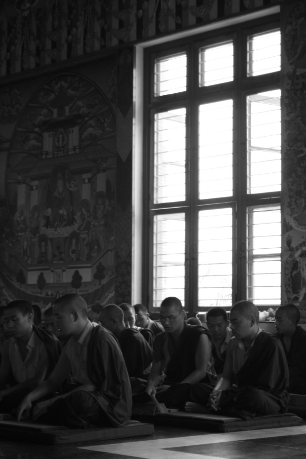 Deep in prayer, the novice monks diligently chant verses.